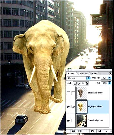 Elephant in the city
